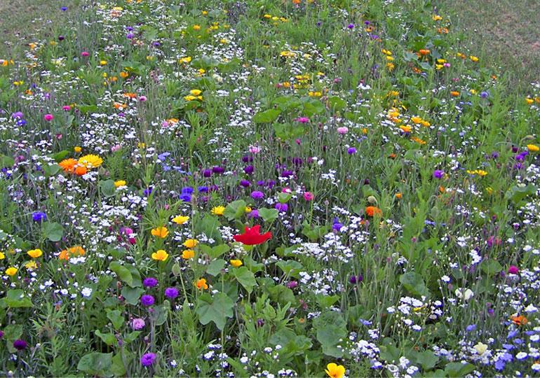Resonnances les champs en fleurs cest du bio ou des for Ou acheter le tapis champ de fleurs