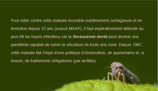 infographie-vignes