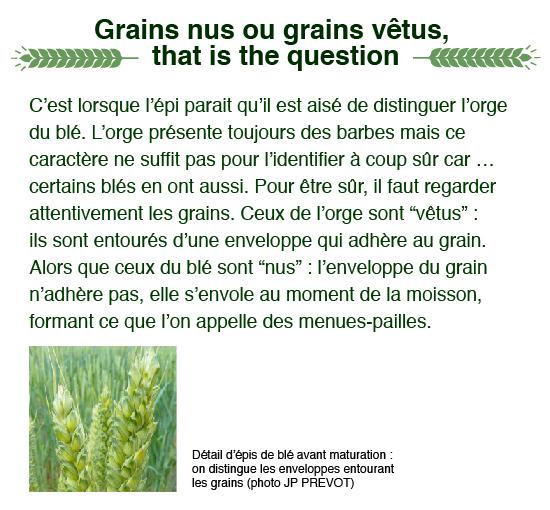 grains-nus-vetus-ble-01
