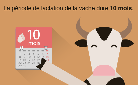 vaches-lait-02-01