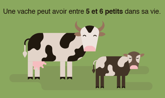 vaches-lait-1