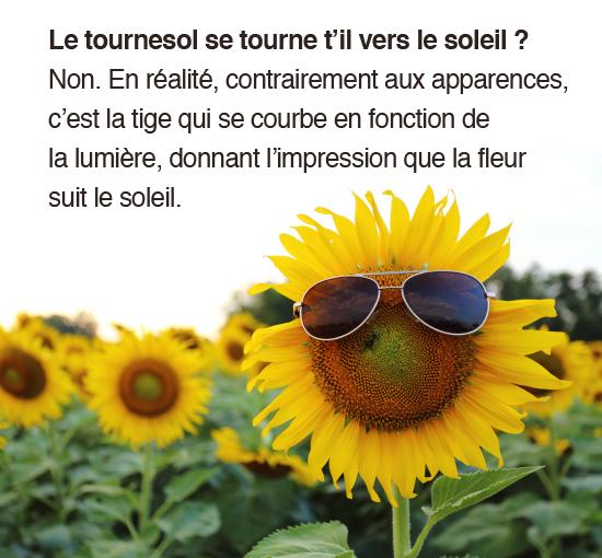 tournesol-04-01