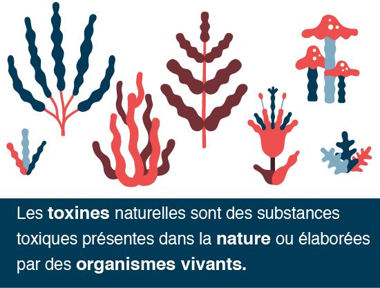 C quoi les toxines
